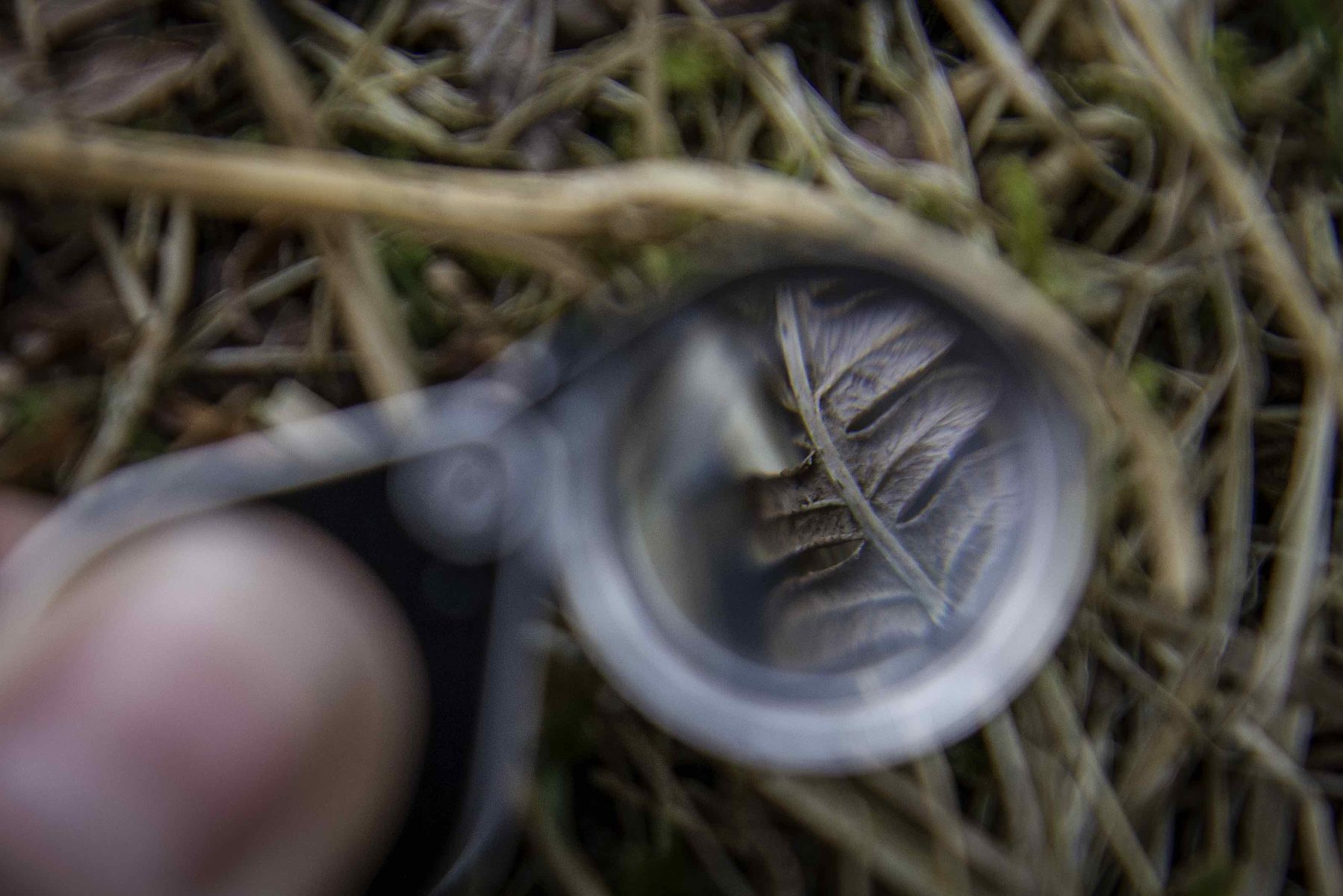 Warnscale geology eyeglass, Warnscale Fells, Buttermere, Cumbria. Photographer: Lizzie Coombes.